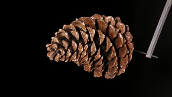 Effet bilame, les variations d'humidité dans les fibres végétales à construire - amàco